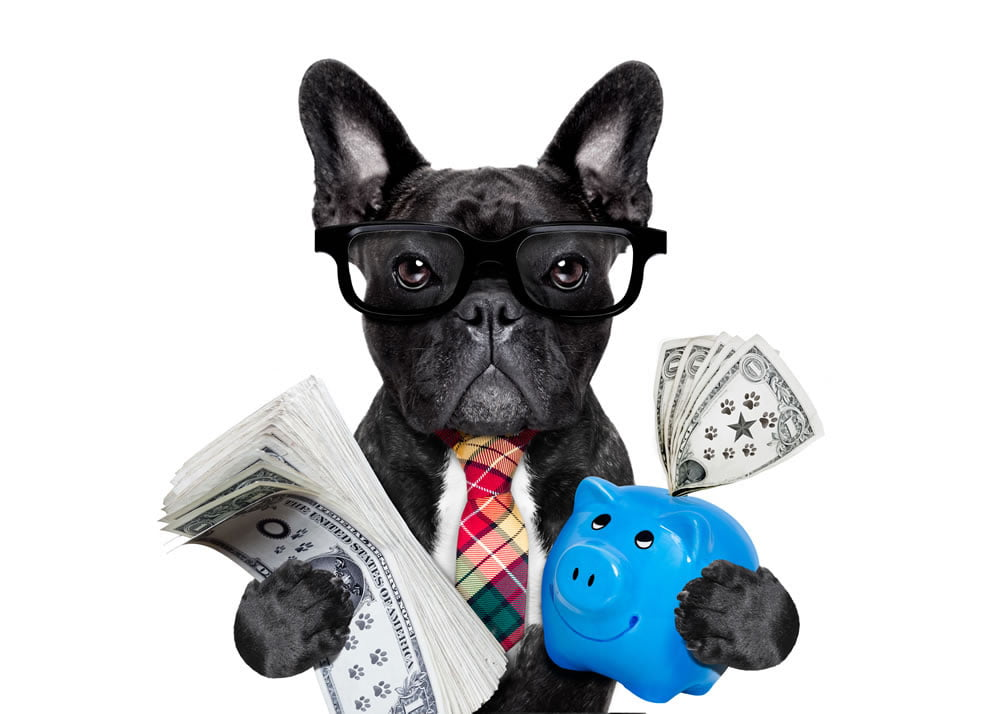 A Business Dog for Asset Finance Q&A